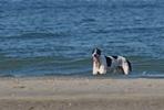 Anouk op het strand ( Gerard Voskamp)